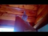 Наглая писечка, залетевшая в мой дом
