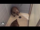 ТОП 5 Лучшие видео с енотами. Смешной енот