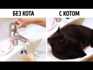 Без кота и с котом