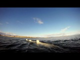 GoPro Polar Bears