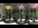 Роза в стеклянной колбе ОПТОМ