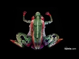 Best of Body Paint Art -- Amazing illusions from Johannes Stoetter
