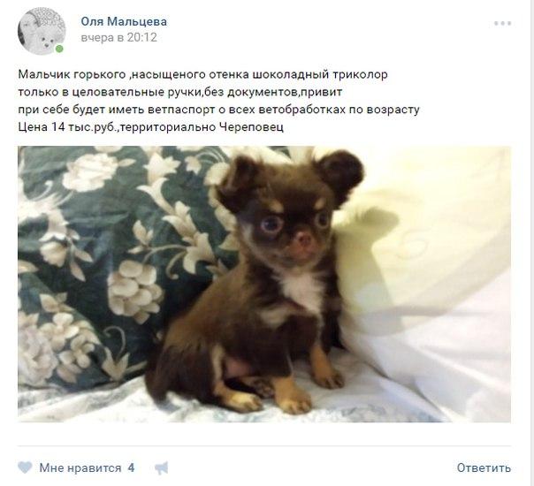 [id60118252|Ольга] , что-ж вы щенка без документов то продаете?