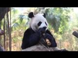 Животные в экшн-сценах (Only Video)