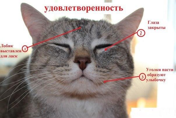 Учимся понимать эмоции котиков