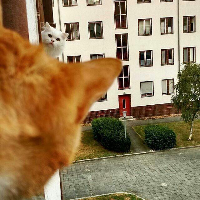 Так мой кот осознал, что он не единственный кот во вселенной