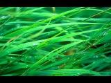 NEVER LET ME GO (2010) - Rachel Portman - Soundtrack Score Suite