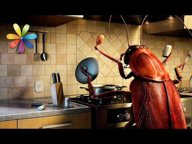 Как избавиться от тараканов навсегда – Все буде добре. Выпуск 906 от 1.11.16