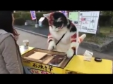 Иногда коты продают еду
