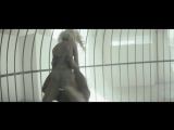 Sia - Elastic Heart feat. Shia LaBeouf &amp Maddie Ziegler (Official Video)