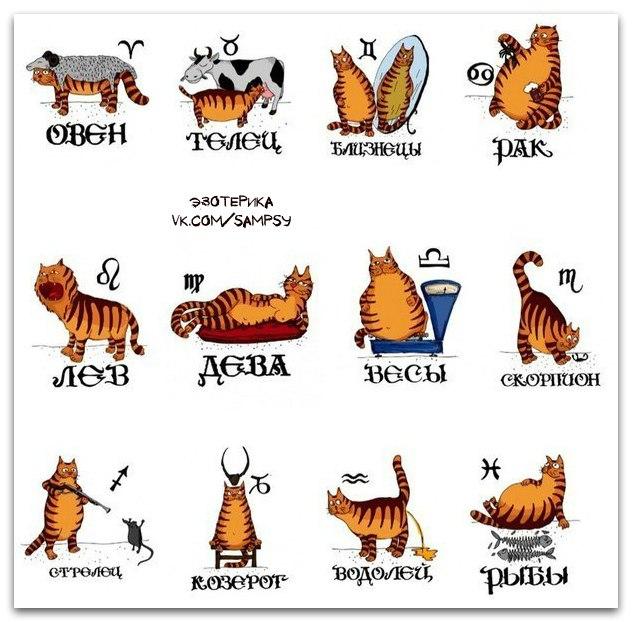 Гороскоп женщи  овен год кота