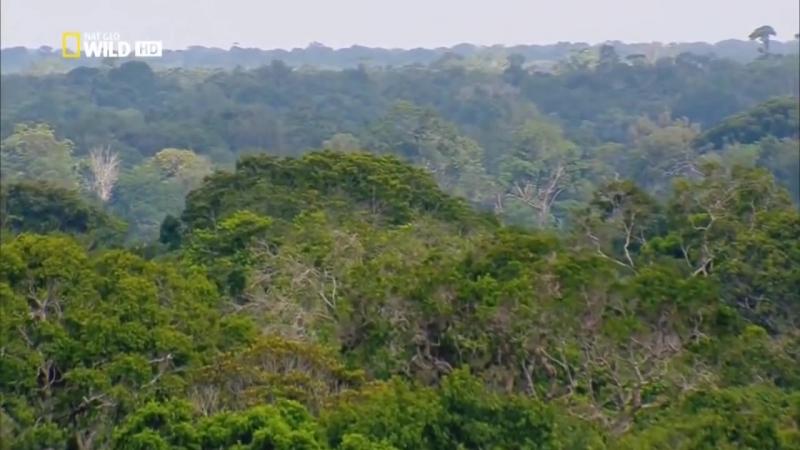 Амазонка. Колыбель жизни. Дикий мир. Документальный фильм