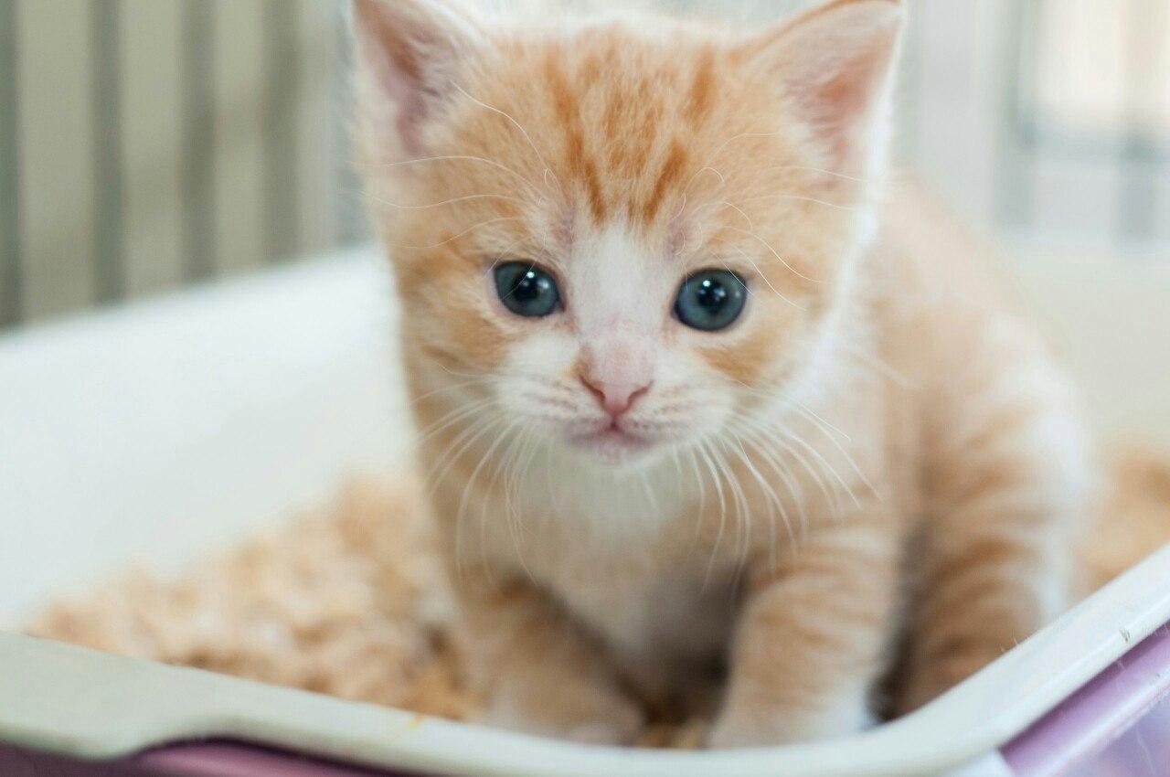 """рыжий котенок - приют для животных """"Зоозащита-плюс"""""""