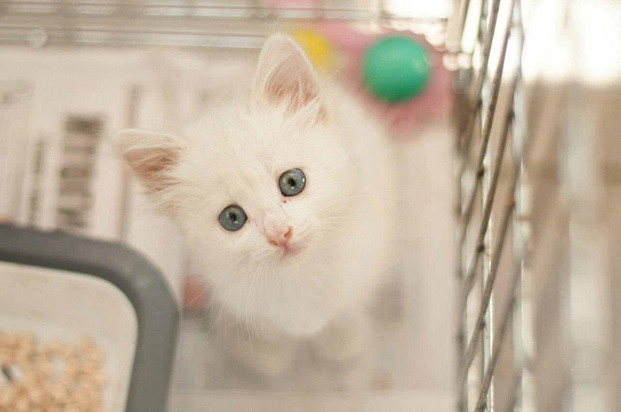 """белый котенок — приют для животных """"Зоозащита-плюс"""""""