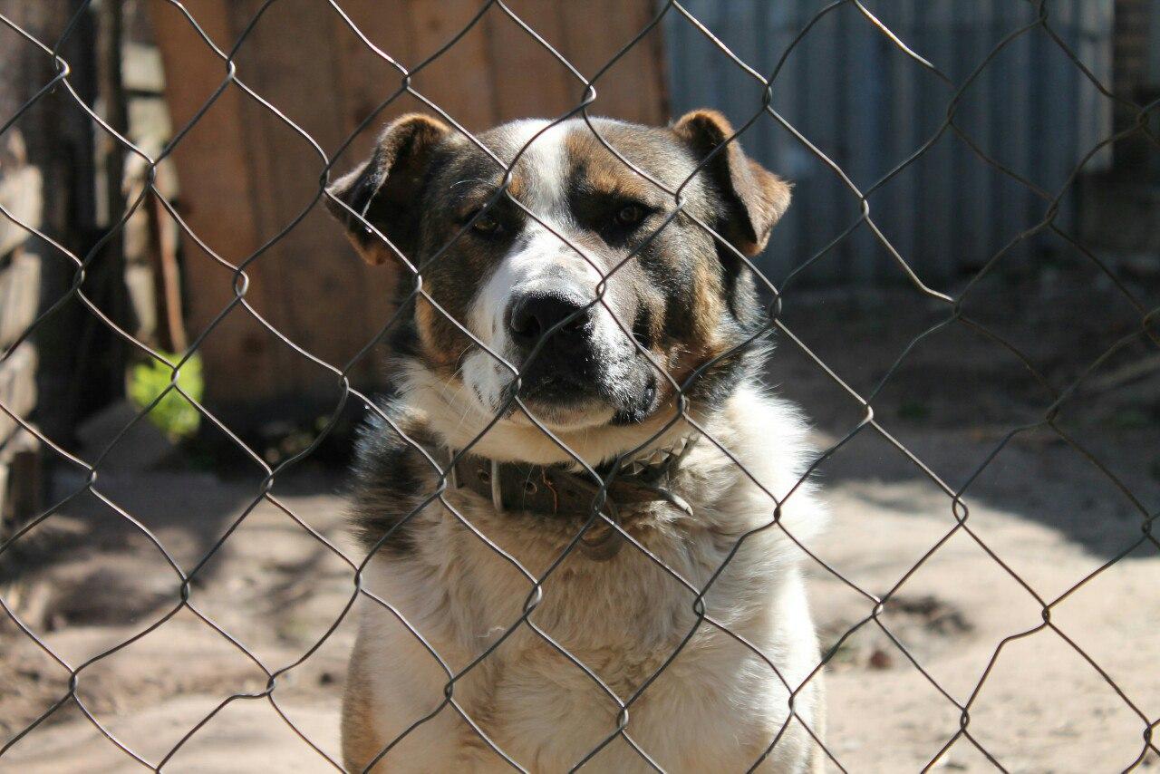 """Алек, собака в добрые руки, приют для животных """"Зоозащита-плюс"""""""