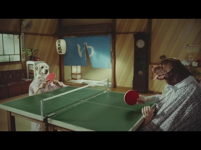 Ping dog pong