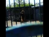 Мишка из нашего зоопарка))