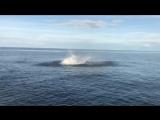 «Боже, я снимаю это на видео»: реакция рыбаков на прыгающую акулу