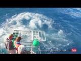 Гигантская окровавленная акула прорвалась в клетку с дайвером