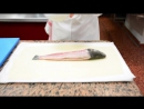 Поль Бокюз рыба