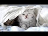 Самые привередливые котики одобряют  The pickiest cats Persil
