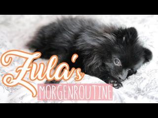 Zula's MORGENROUTINE ( Pomeranian ) 😍 | Dagi Bee
