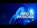 LEO IMAI - Bird Of Paradise (Live at Fever, Tokyo, 11092016)