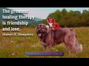 Short and Sweet Friendship Quotes | Funny Quotes About Friends