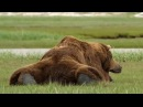 Животные АЛЯСКИ - Битва за Выживание. Animal Planet HD
