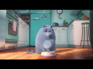 Тайная жизнь домашних животных (2016). Тизер-трейлер