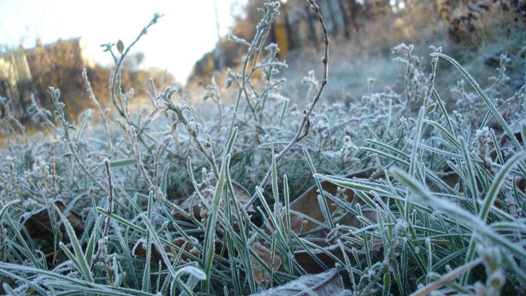 МЧС предупреждает о заморозках в Ростовской области 12 и 13 апреля