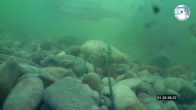 Ловля карпа на бойлы с пастой. Подводная съёмка, Часть 3