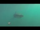 SHARK ATTACK! Superstars  Divas go shark diving Outside the Ring Episode #40