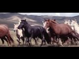 Монгольский рок. Xiger Xiger - Hanggai