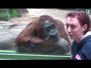 Когда у обезьяны лицо умнее, чем у человека