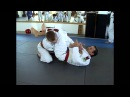 Rickson Gracie Arm Bar by Pedro Sauer rickson gracie arm bar by pedro sauer