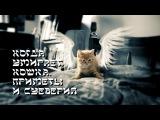 Когда умирает кошка  Приметы и суеверия