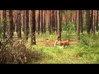 Ефросинья 1 серия Мелодрама HD (1 сезон)