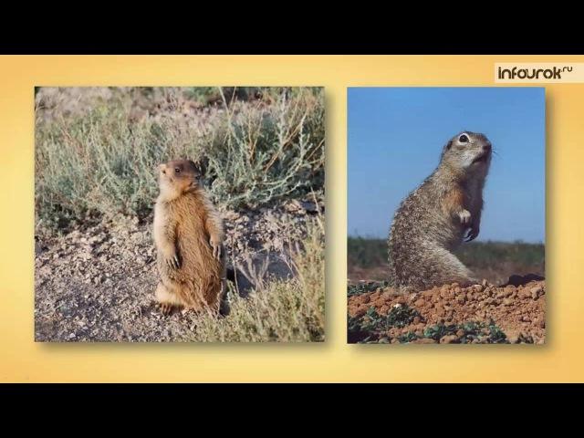 Класс Млекопитающие Отряды Грызуны, Зайцеобразные