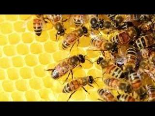 Развивающий мультфильм о пчелах