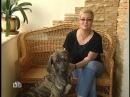 Своя игра. Богословский - Пуговкин - Паклин 02.11.2008