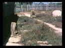 Казаки-разбойники (1979)