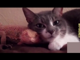 Коты и кошки - отборные приколы 2016 - 2017! Лучшие и самые смешные приколы с котами и кошками