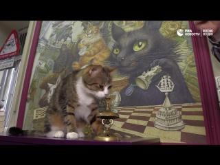 Кот-математик