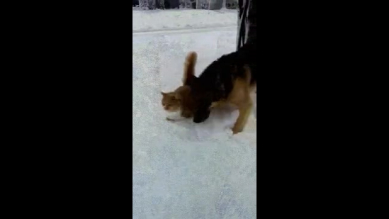 собака жжёт