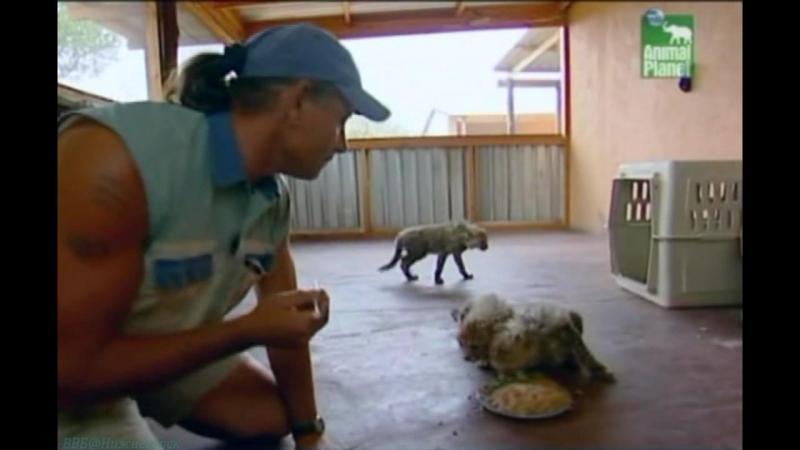 BBC «Заповедник в дебрях Африки» (04 серия) (Реальное ТВ, животные, 2005)