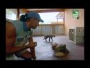 BBC Заповедник в дебрях Африки 04 серия Реальное ТВ животные 2005
