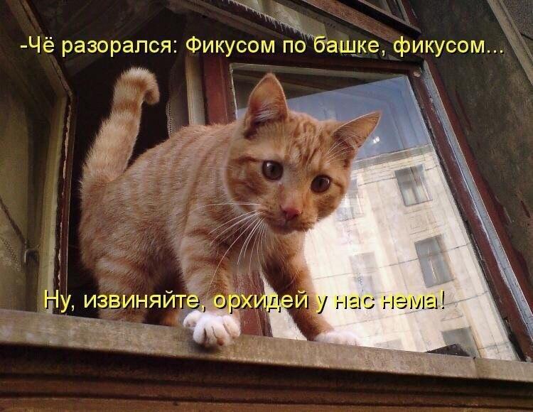 коты и цветы - Страница 2 V3k7-sNFk0c