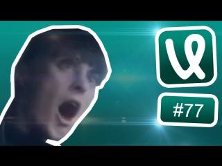 Лучшие ролики недели #77 Кошачий коллайдер!