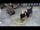 Дедовщина в мире животных